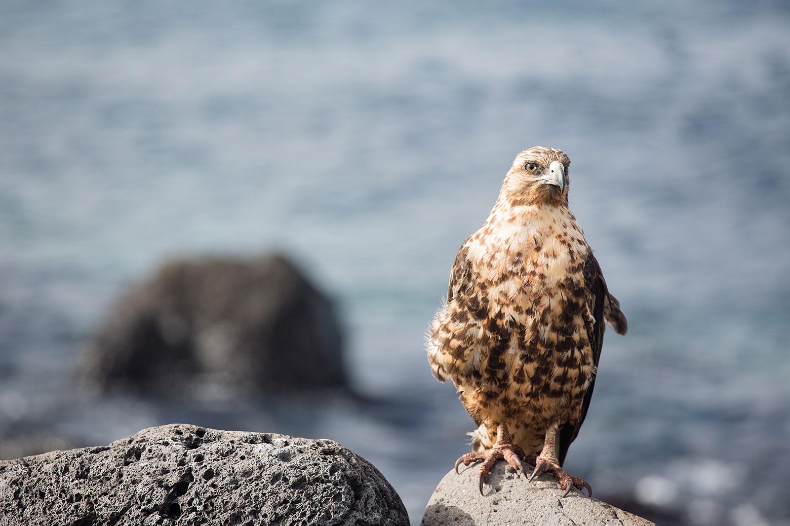 Galápagos: one of a kind