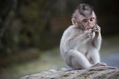 Monkey_forest